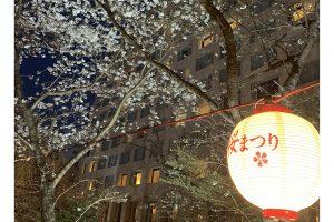 アイキャッチ桜